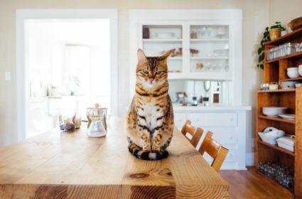 Richtiges Trockenfutter für Ihre Katze
