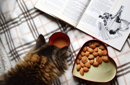 Co kot może jeść